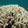 Alerting the WIO to coral bleaching in the International Year of the Reef!